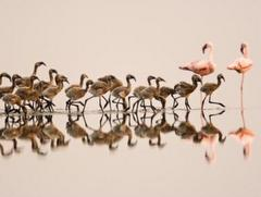 Tudor Caravan Park - Flamingoes & young at Slimbridge Wetlands Centre