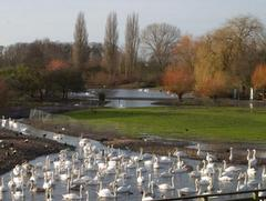 Tudor Caravan Park - View of the reserve at Slimbridge Wetlands Centre
